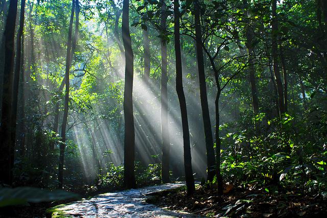 Vườn quốc gia Ba Vì 2